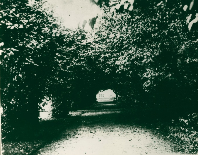Coole Park333